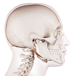 頭蓋骨療法(クラニオセイクラル)