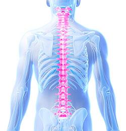 脊椎調整療法(カイロプラクティック)
